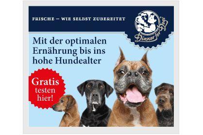 Dinner for dogs Gratisprobe Vorschau